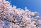 【只今ゼロ部咲き】4月のレイキワークショップはコチラ♡