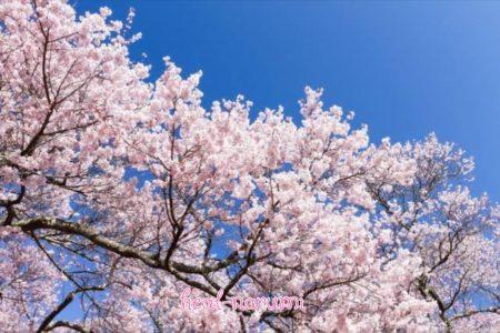 【東京・4月】只今ゼロ部咲き!レイキワークショップはコチラ♡