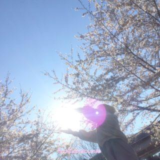 【千本桜祭り2019】宇宙からのエネルギーが降ってきたら。。♡