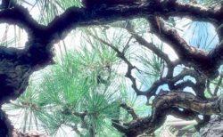 【11月・広島】募集スタート!聖地のエネルギーで、祈りのパワーを高める方法